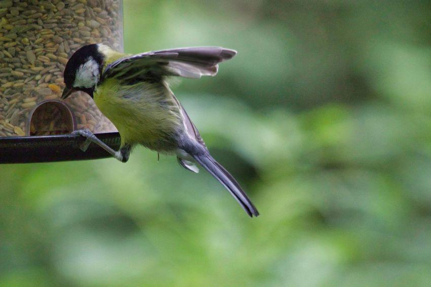 Bird Bird Feeder Perching Bat - Animal Close-up Animal Themes Green Color Blooming Wildlife Beak