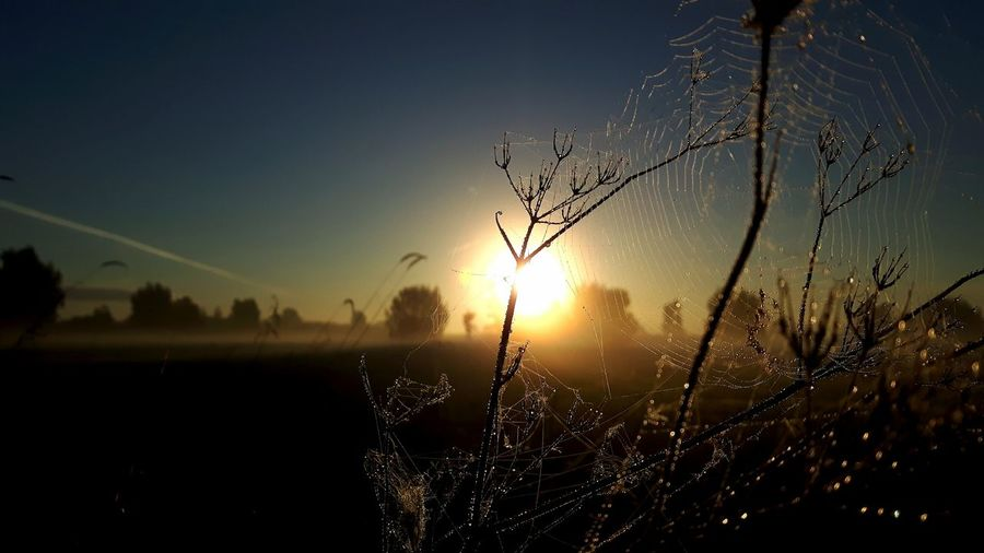 Close-up of spider web on plant against sky during sunset
