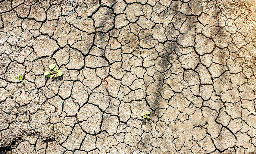 Dry soil from