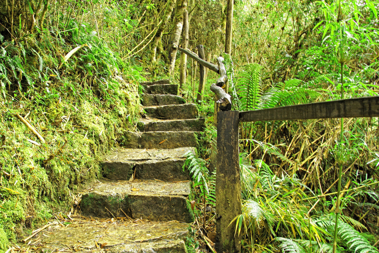 steps, steps and staircases, staircase, railing, stairs, green color, day, nature, growth, outdoors, no people, hand rail, tree, climbing, beauty in nature
