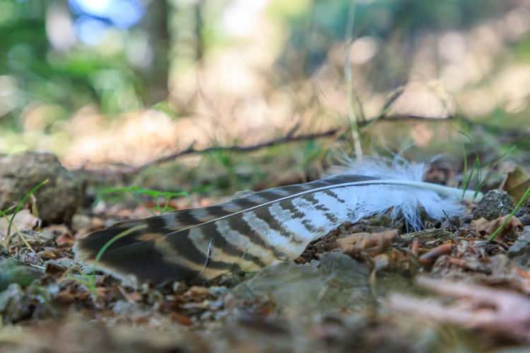 Close-up of feather on the ground