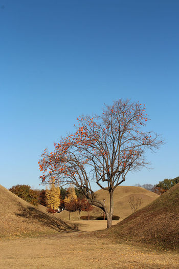 Bare tree on landscape against clear blue sky