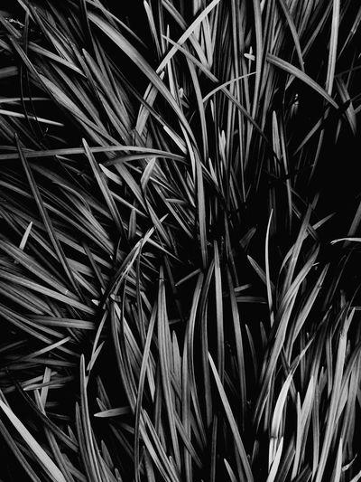 풀잎들 Backgrounds Full Frame Abstract Close-up Sky Palm Leaf Leaf Vein Plant Life Leaves Date Frond Palm Tree Palm Frond Blooming Leaf Growing Date Palm Tree Tropical Tree Evolution  Abstract Backgrounds Almond Tree Coconut Palm Tree Fern