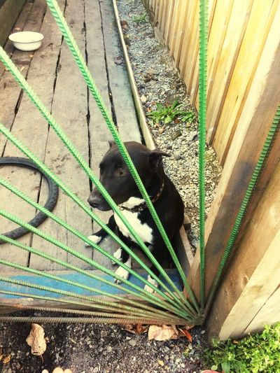 Animal Themes One Animal Animal Day High Angle View No People Domestic Domestic Animals First Eyeem Photo