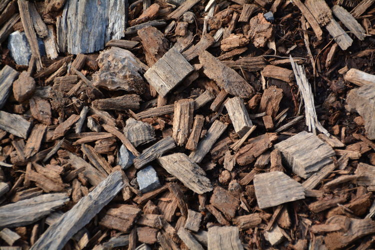High angle view of wood on field