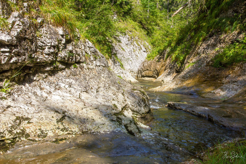 Padis, Transylvania Hiking Hungary Padiș Romania Transylvania Beauty In Nature Day Hungarian Landscape Nature No People Outdoors River Rock - Object Scenics Stream - Flowing Water Tree Water Waterfall