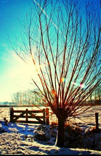 Holland Winterwonderland Winter Sun_collection