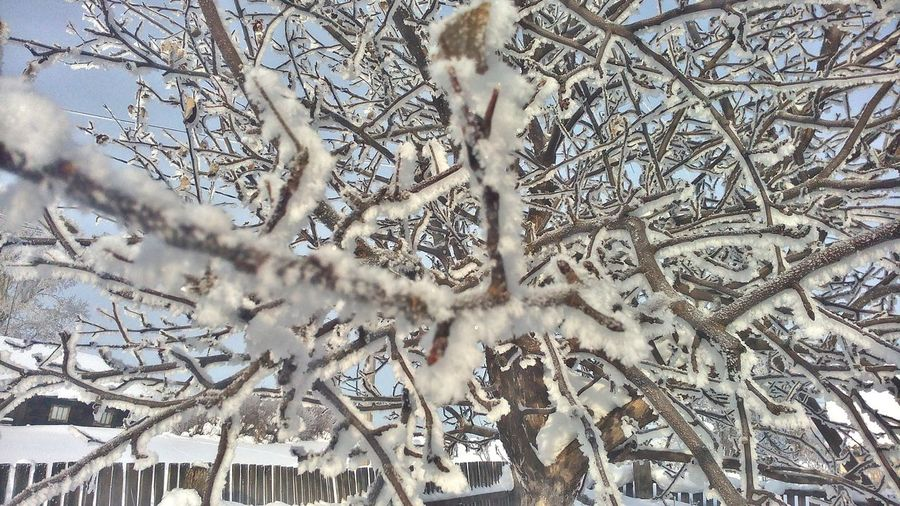 Day Winter Tree Snow No People Soonspring Sun Cold Temperature Outdoors Nature_collection Nature Beauty In Nature Beautiful EyeEmNewHere