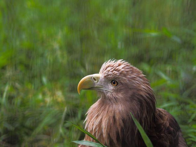 羽毛の質感まで見事に再現できた🤗のに、ボケが汚いのが残念…😭 Bird One Animal Animal Themes Day No People Close-up Zoo Outdoors Olympus OM-D E-M5 Mk.II