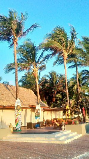Caribe Reggae Sky Brisa Palmeras Cielo Azul Tree Palm Tree Road Sky Coconut Palm Tree Calm Tropical Tree