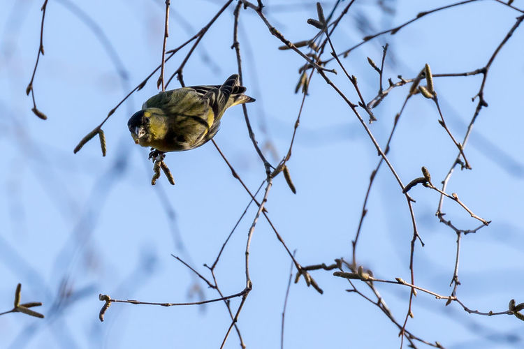 Low angle view of bird perching on twigs against sky
