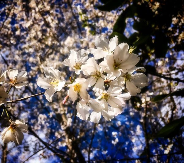 Walking Around Taking Photos Plant Flower Growth Flowering Plant Fragility Beauty In Nature Vulnerability  Springtime Blossom No People Tree Sunlight Flower Head Nature Freshness White Color Low Angle View