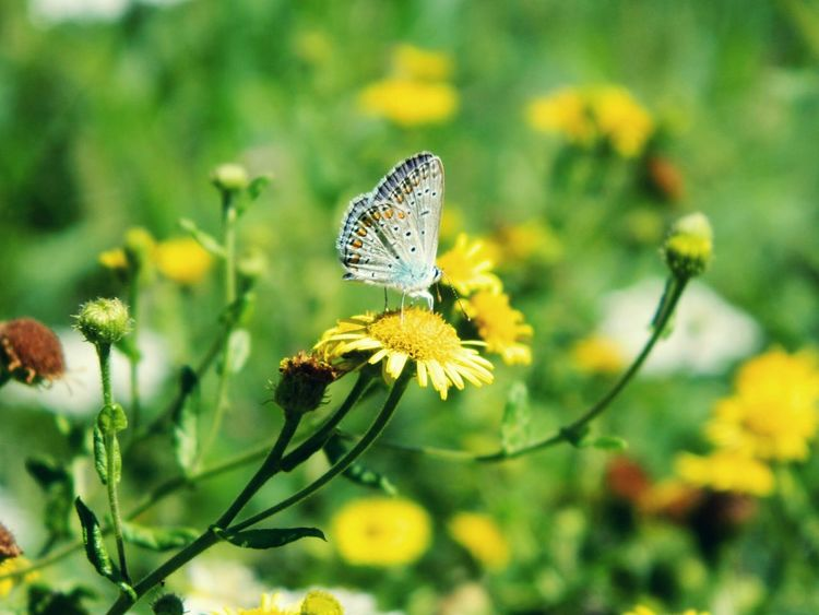 Flower Plant Nature Beauty In Nature Wildflower Yellow Insect Fragility Outdoors No People Flower Head Butterfly - Insect Day Beauty In Nature Tranquility Nature Adventure