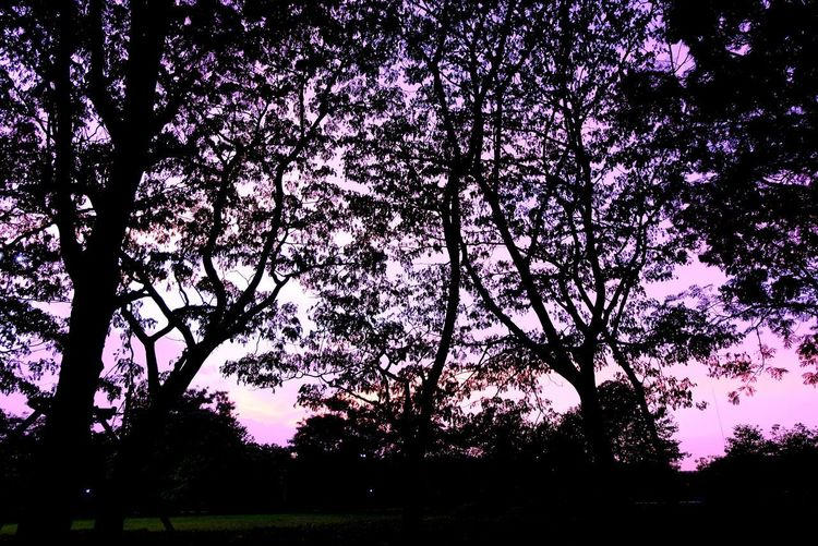 Shillouette Dark Tree Nature Abstract Background Tree Backgrounds Silhouette Branch Sky Close-up Countryside Tranquil Scene Scenics Purple Color Tranquility Treetop