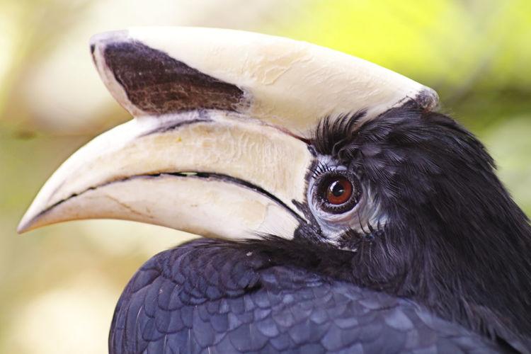 Close-up of black hornbill outdoors