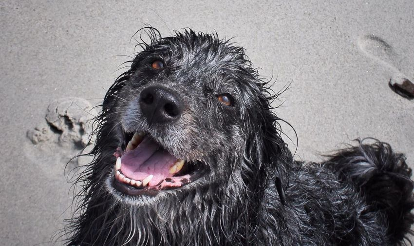 Pet Portraits Hank at his happiest Tadaa Community