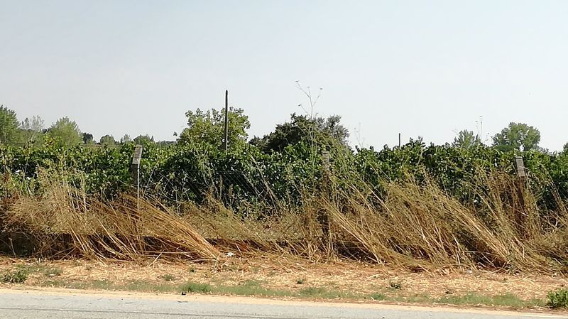 Nofire Wind Deadandalive Plants