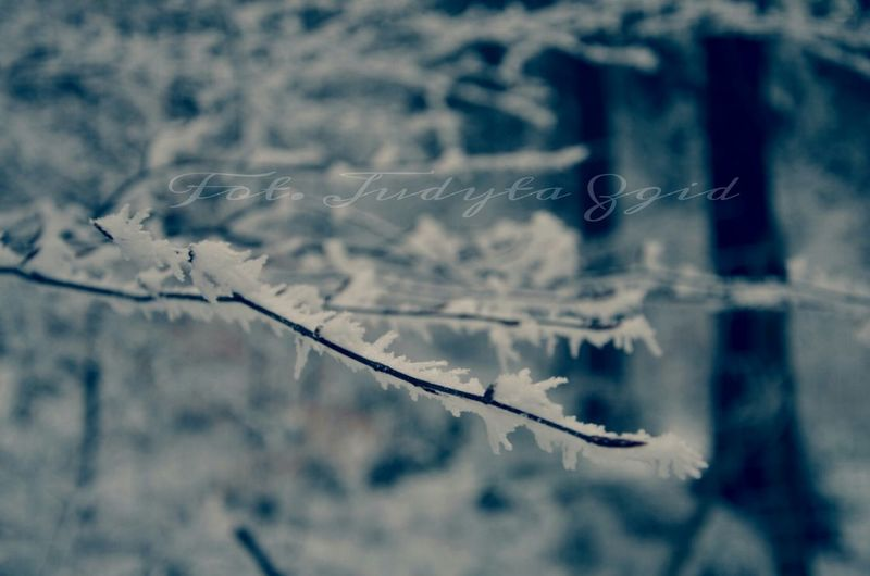 Nature Beauty In Nature Outdoors Snow Frozen Trees Forest Winterinmountains Winter Cold Szklarska Poręba Frost Zima Mróz Zimawgórach Las Drzewa śnieg Polska Poland Foto Fotografia Photo Photography