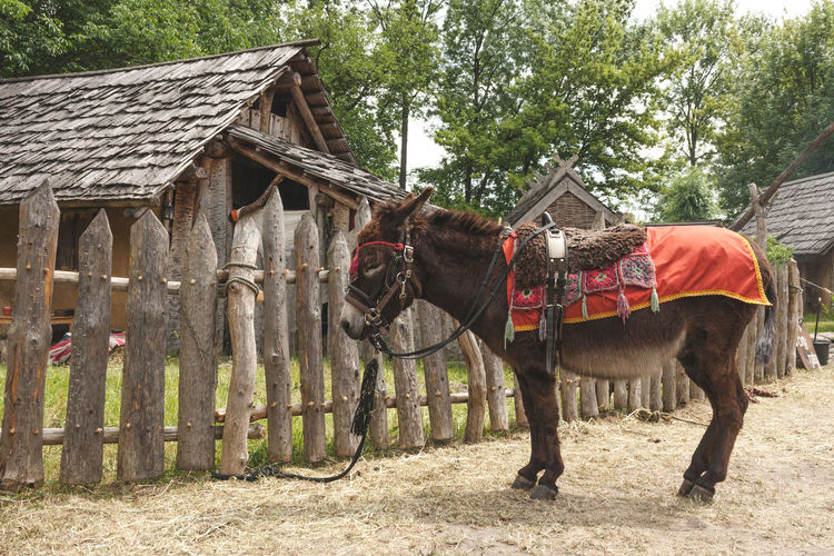 Horse Standing In Front Of Building