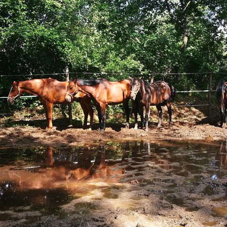 Tree Water Horse Sky Livestock Group Of Animals Ranch