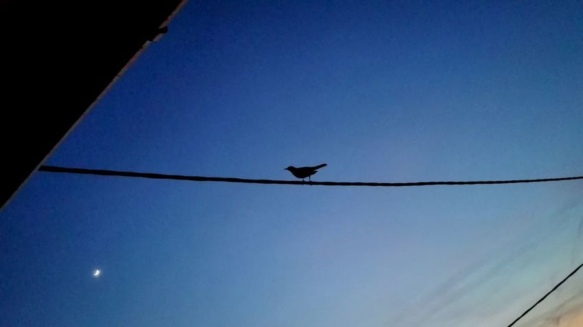 Blue Blue Sky Black Black Bird Nature Bird Flying Blue Silhouette