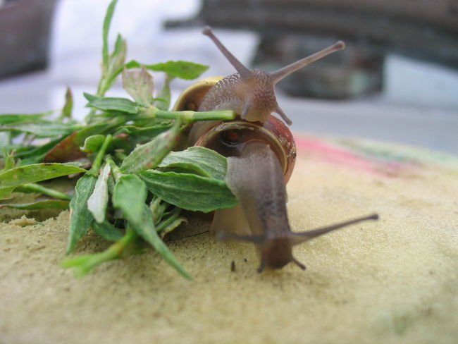 Animal Themes Macro Beauty Macro Photography Nature Selective Focus Snail Snails Snails Having Fun Zoology