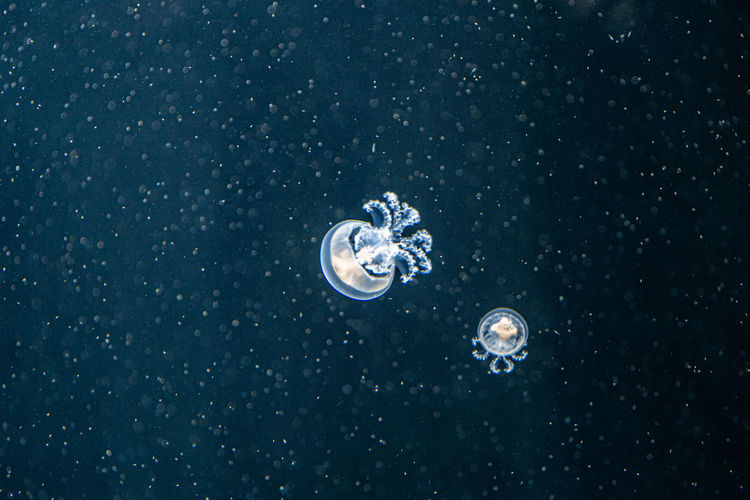 View of jellyfish in sea