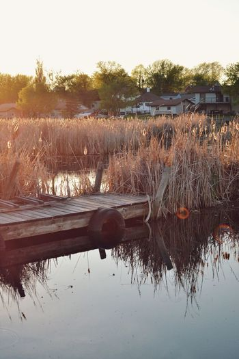 The Great Outdoors - 2016 EyeEm Awards Daytime Golden Hour Cattails Tall Grasses Lake Reflections Dockside Canadian Summer Kenora Ontario Canada Dusk Tranquility Idyllic Scenery Standing Water Rural Scene Beauty In Nature Landscape Waterscape Kenora Ontario