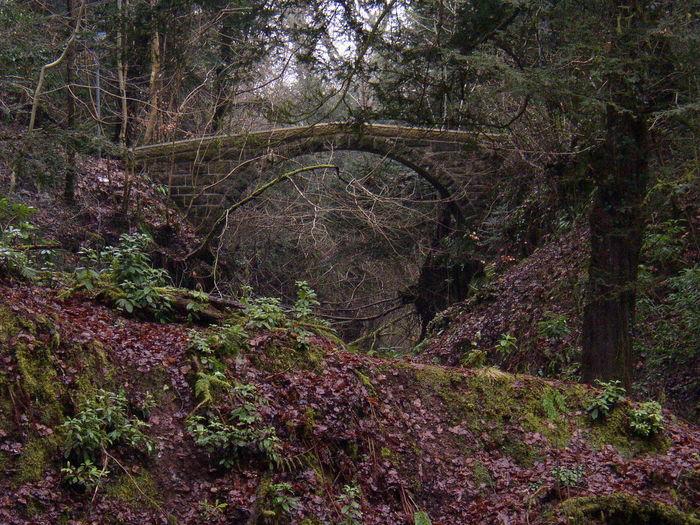Motherwell Barons Haugh Bridge Scotland