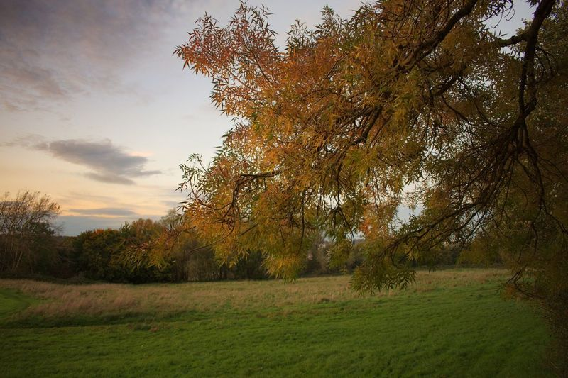 Tree Nature Beauty In Nature Autumn Grass Tranquility Tranquil Scene Landscape Scenics Growth Field No People Outdoors Sky Day