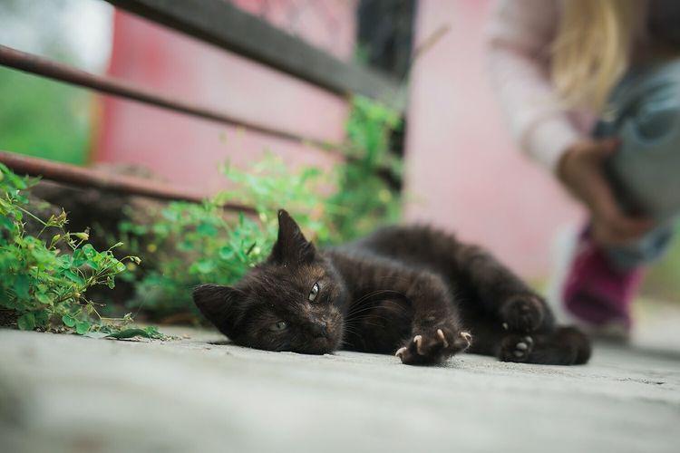 Animal Themes Animal Cats Meow Pets Feline Domestic Cat Black Color Lying Down Close-up Cat Sleepy Kitten