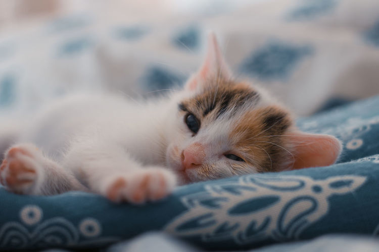 Portrait of kitten relaxing on bed at home