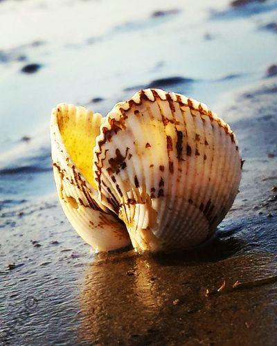 Muschel Muscheln Shells Shell Strand Beach Beach Photography Amare Ammeer Atthebeach Nature Photography Landscape #Nature #photography Naturephotography