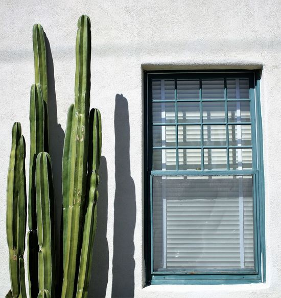 Architecture Cacti Cactus Cactus Lovers Canon Canonphotography Close-up Day Out Desert Beauty Desert Life Green Color Growth No People Sunlight Window Frame