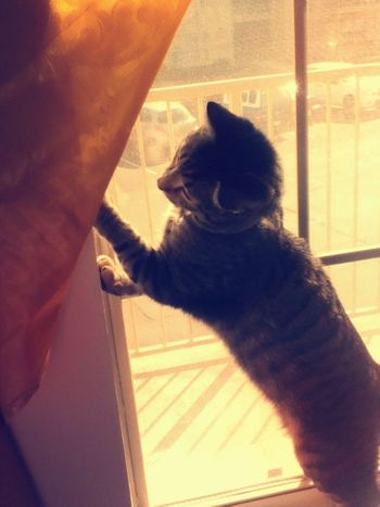 I see a bee! Cats Cute Pets Animals Love