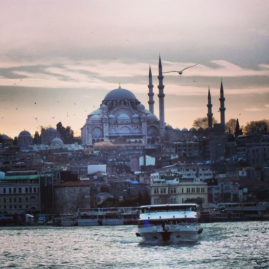 Istanbullovers Mosque Bird Photography