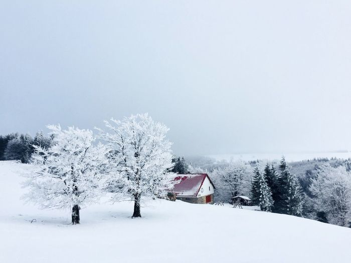 Remote house in the mountains surrounded by trees covered in snow