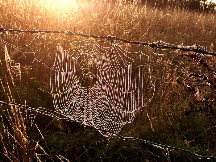 Close-up Walking Around Winter Early Morning Still Life Photography Spider Web
