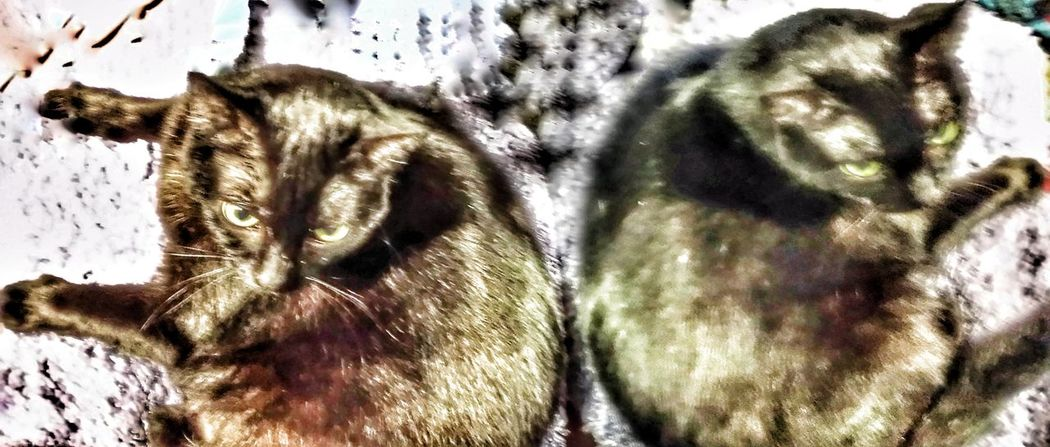 Freedom in the mirror with special effects Animal Themes No People Close-up Mammal Cat Black Gato Negro Black Cat Photography Black Cat Collection Domestic Animals One Animal Cat In Mirror Special Effects