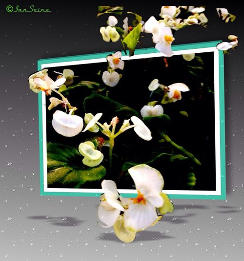 Flowers Being Creative Nature_collection Spring Has Sprung