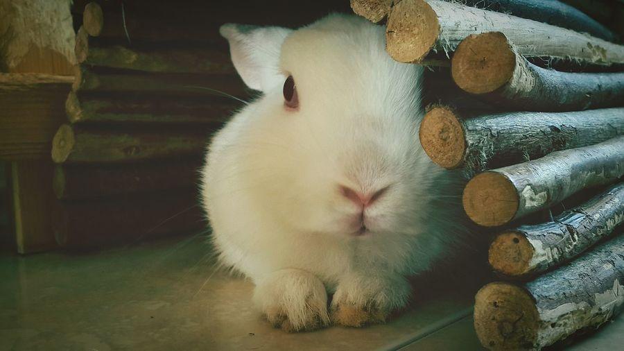 Thailand Cheese! My Rabbit She say hi!