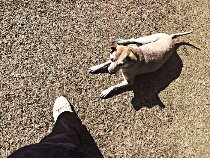 Dog Doi pui Walking Around Dog Street