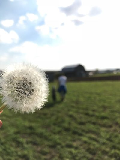 Plant Field Nature Sky Flower Land Growth Fragility Focus On Foreground Dandelion