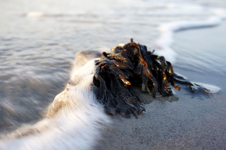 Close-up of seaweed on the beach