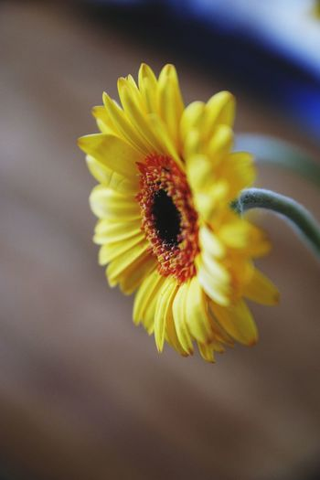 Desde mi casa! Flower Petal Fragility Flower Head Close-up Yellow Freshness No People Beauty In Nature Pollen Nature Plant Day Studio Shot