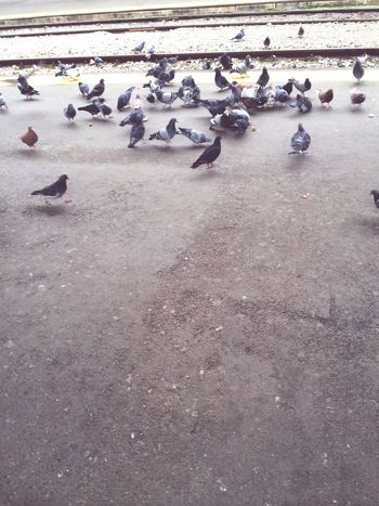 Pigeons Peace ✌ Feeding The Birds Happiness Commuting Tranquility Traveling