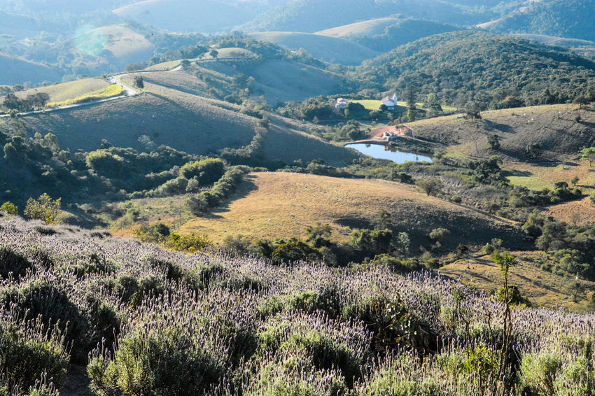 ezefer Agriculture Beauty In Nature Cunha Day Environmental Conservation Horizontal Landscape Lavanda Lavanda Field Lavandario Mountain Mountain View Mountains Nature No People Outdoors Scenics Social Issues Tree