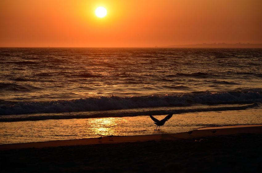 pôr do sol Beach Beauty In Nature Bird Horizon Horizon Over Water Idyllic Nature No People Orange Color Outdoors Scenics - Nature Sea Silhouette Sky Sun Sunset Tranquil Scene Tranquility Water