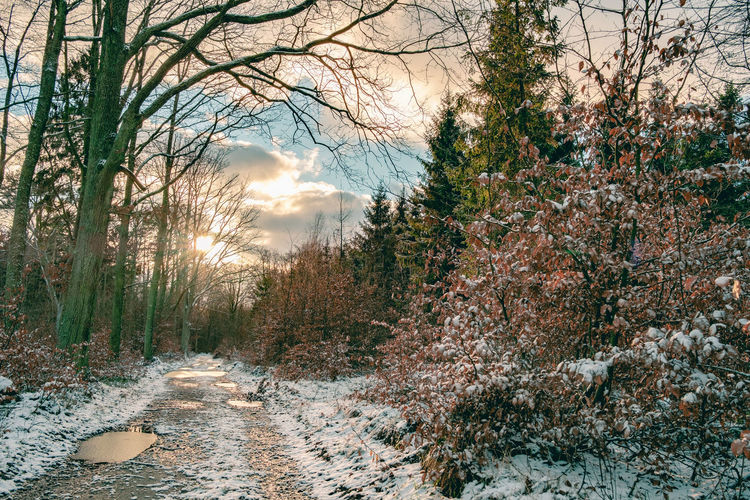 Melting snow & a path in the woods. [65/365] 2016.12.13 Beauty In Nature Forest Forest Path Forest Photography Forestwalk Nature Nature_collection No People Sky And Clouds Snow Sunset Winter Winter Trees Winter Wonderland Winterscapes