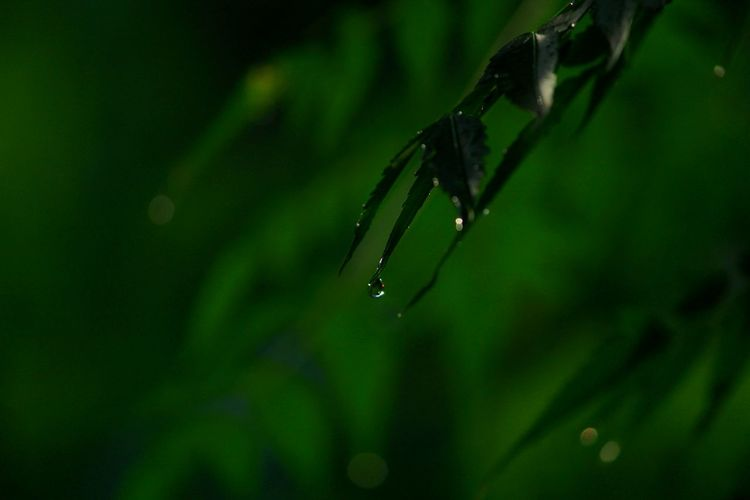 Insect Animals In The Wild One Animal Nature Spider Web Green Color Animal Wildlife Close-up Animal Themes Spider No People Outdoors Focus On Foreground Day Full Length Water Leaf Beauty In Nature Splashing Droplet Fragility Beauty In Nature Drop Rain Weather Canon_photos